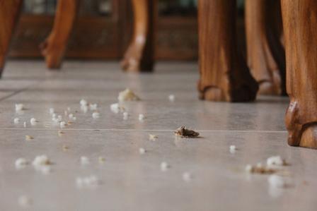 http://site.ucdb.br/public/liturgia-diaria/9756-os-cachorrinhos-debaixo-da-mesa-comem-as-migalhas-que-as-criancas-deixam-cair.jpg