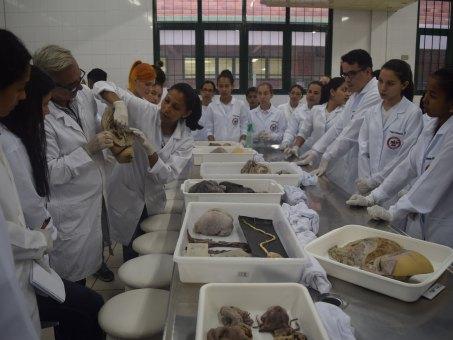 Nos laboratórios de Biossaúde alunos tiveram contato com peças anatômicas