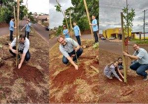 Plantio de árvores em canteiro de avenida na Capital